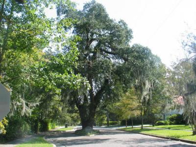 SC Historic Properties Record : Browse National Register Listings |
